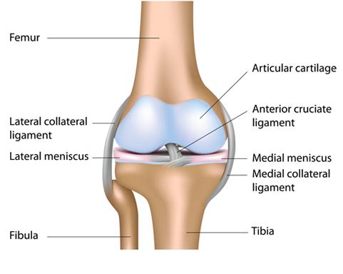 rockwall knee specialist