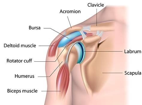 shoulder elbow causes of shoulder pain treatment more