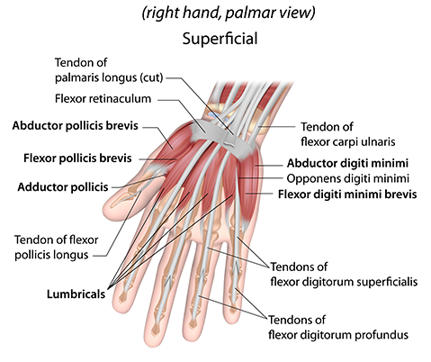 Wrist & Hand - Lake Pointe Orthopaedics