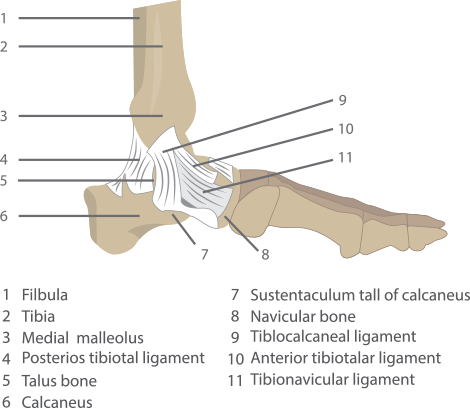 ankle specialist